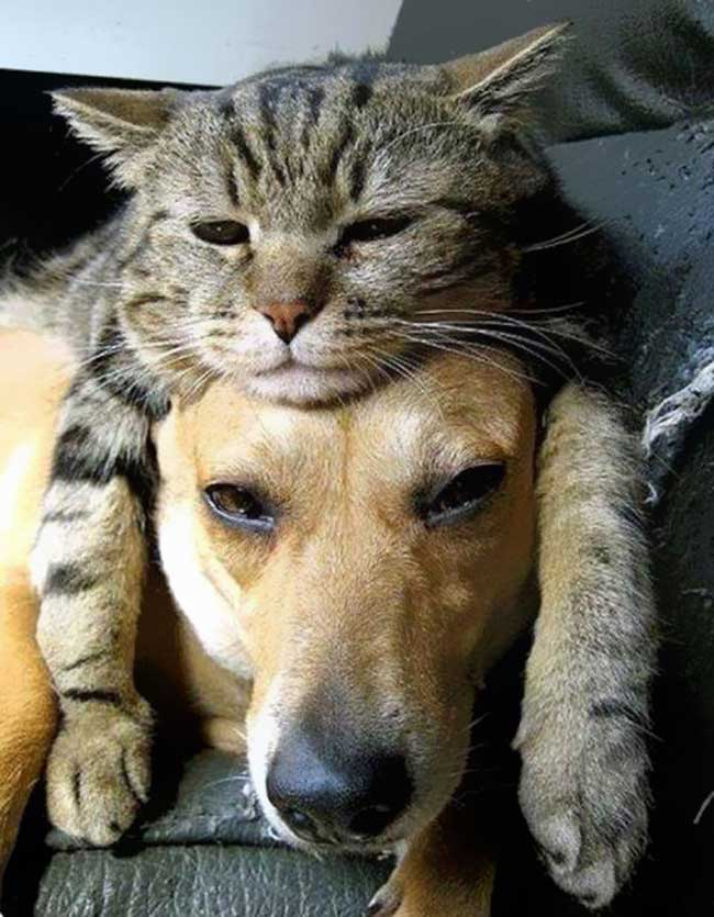 cat-on-head10