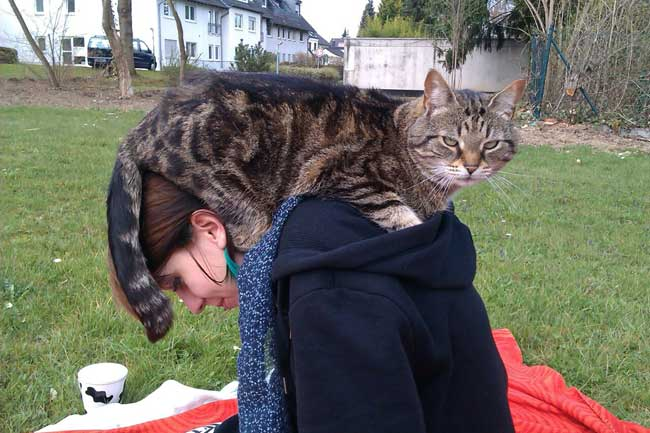 cat-on-head6