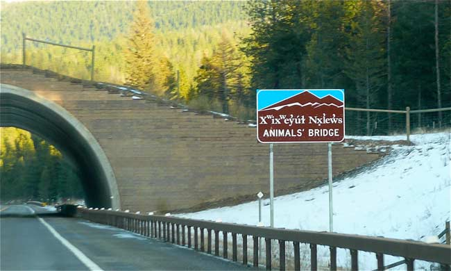 01Animals_bridge_flathead_reservation