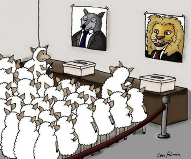 Lion-Or-a-Wolf-On-Election-Day